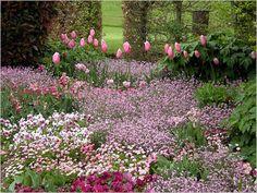 Claude Monet's Garden, Giverny