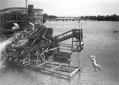 Diving horse at Hanlan's Point 1907. Oh my.