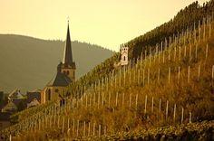 Zeltingen-Rachtig in Bernkastel-Kues holiday region in Mosel