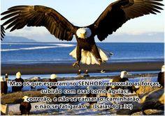 """O AVISO DE DEUS 1: """"Vamos a obra que o Senhor levantou e somos guiado..."""