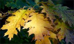 Blätter - Jahreszeiten - Galerie - Community