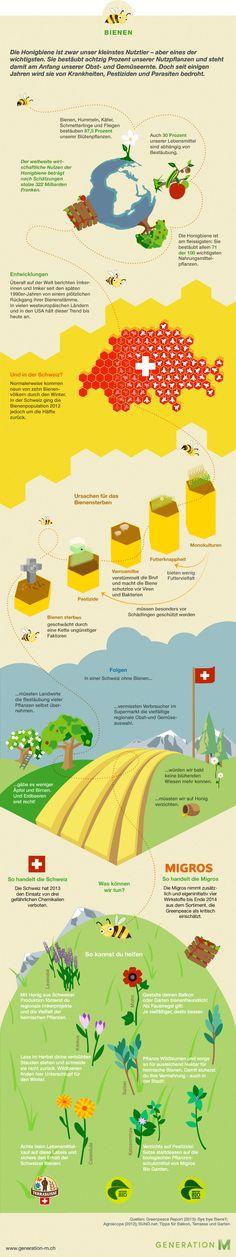Infografik Bienen in der Schweiz