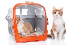 Transport box for 2 cats Cats for two in transport box Extra large Hun Katzen Cat Lover, Plastic Laundry Basket, Transportation, Woodworking, Organization, Cats, Big Dogs, Pets, Cat Cat