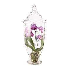 simply elegant, for the best mom there is. phalaenopsis in large orchid glass terrarium.
