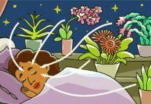 9 növény a hálószobádba, hogy éjszaka is oxigént termeljen Aloe Vera, Tinkerbell, Pikachu, Disney Princess, Disney Characters, Health, Home Decor, House, Balcony