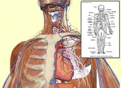 Human Anatomy and Physiology Study Course Review-Great study Course #education #anatomy    Recommended reviews from: Medical Practitioner or Specialist Student or Educator Researcher or Anatomist Injury Law Attorney Trainer or Sports Professional Chiropractor or Therapist Nurse or Paramedic