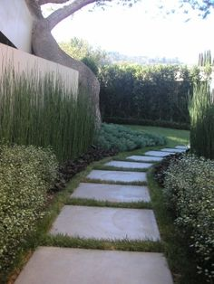 love the landscaping, path and wall