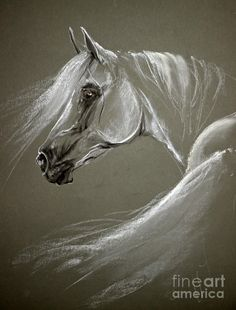 Grey Arabian Horse Pastel by Angel Tarantella