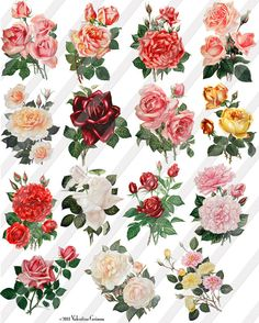 Lustrous Roses Digital Collage Sheet  15 Large by ValentineGrimm, $3.00