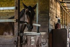 What is Laminitis, How It Is Caused and How To Treat It! - TheRider'sReins