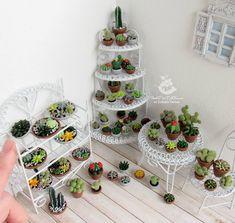 Много кактусов не бывает ✌