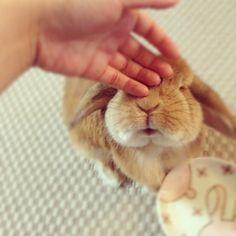 Eddy & Rambo Bunny : bunny facts