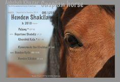 Caspian mare, Henden Shakila.