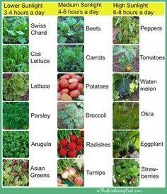 Sunlight requirement for certain garden vegtables