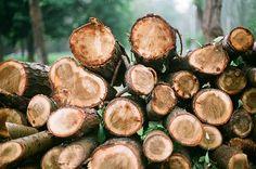 Logs...