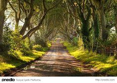 Bu ağaçlar Stuart ailesi tarafından 18. yüzyılda dikilmiş.