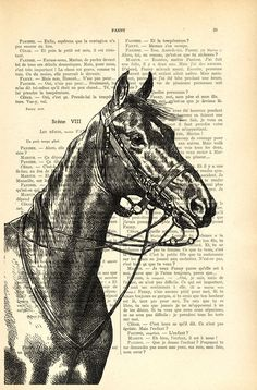 Horse dictionary art print horse illustration by MadameMemento