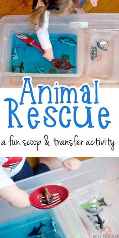 Animal Rescue Transfer Activity: A fun indoor toddler activity that's easy to set up; a great rainy day toddler activity activities for 3 year old boys Animal Rescue Transfer Activity - Busy Toddler Indoor Activities For Toddlers, Toddler Learning Activities, Infant Activities, Preschool Activities, Water Play Activities, 2 Year Old Activities, Family Activities, Animal Games For Toddlers, Color Blue Activities