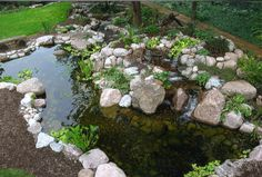 Crystal Clear Water in a Renovated Backyard Pond.  #Aquascape