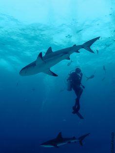 Shark dive anyone?