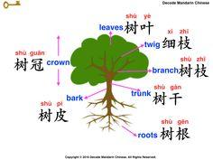Decode Mandarin Chinese—Parts of a tree