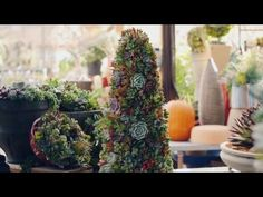 Succulent Christmas Trees (and instructions for DIY)
