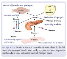 """The main idea is that in the complicated network of biochemical reactions, insulin stands out as a major point of regulation. Figure I‑2 shows how we describe it to medical students and this is how we will describe it here. The ups and downs of insulin are what we try to control in the use of dietary carbohydrate restriction as a therapeutic method. So, low‑carbohydrate diets provided some unifying theme in teaching."""