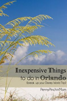 If you are headed to Orlando to Disney World, you already know it is expensive.  We've rounded up TEN great things you can do outside of the resort (and most are really affordable)!!