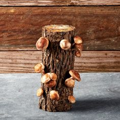 A Shiitake Mushroom Log!  For $29.95 you get Shiitake Mushrooms every two months for more than three years from your own log....Just keep it moist!  Williams Sonoma