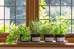野菜の種類によって育て方がそれぞれ違いますので、合わせて育てましょう。