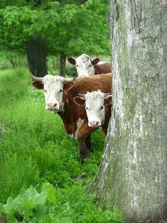 Heimliche Beobachter im Wald...;-)