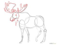 moose drawing step by step - Google Search