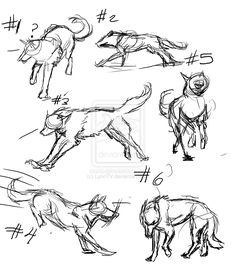wolf sketches | Wolf Sketches by LynnTV