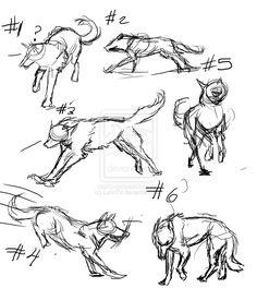 wolf sketches | Wolf Sketches by LynnTV