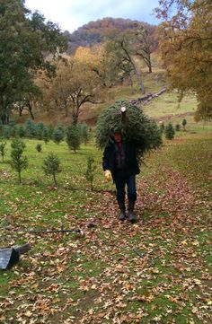 choose and cut christmas tree farm nelson family vineyards - How To Start A Christmas Tree Farm