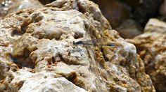 Alighting on the limestone