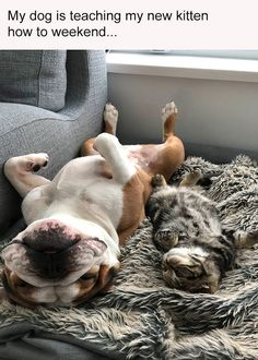 This is how to weekend #dogsfunnywithcaptions