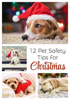 12 Pet Safety Tips For Christmas