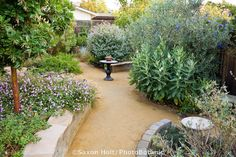 Crushed rock decomposed granite path between drought tolerant garden beds with Asclepias speciosa (Showy Milkweed), lantana, Arbutus