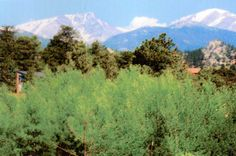 Estes Estes Park, Colorado, Mountains, Nature, Travel, Aspen Colorado, Naturaleza, Viajes, Destinations