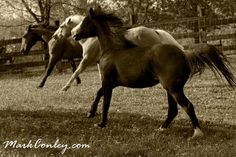 Hobby farm horses