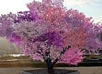 This Tree Grows More Than 40 Different Kinds of Fruit