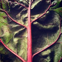 Swiss chard almost always makes it's way into my smoothies and on my plate on a daily basis. Eat To Live, Smoothies, Vegetarian, Plate, Foods, Vegan, Health, Recipes, Smoothie