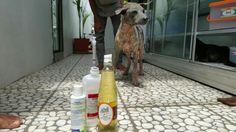 Bali Rescue Dog Squad menyelamat kan nasib anjing anjing di Bali  yang terlantar,di siksa dan di buang.
