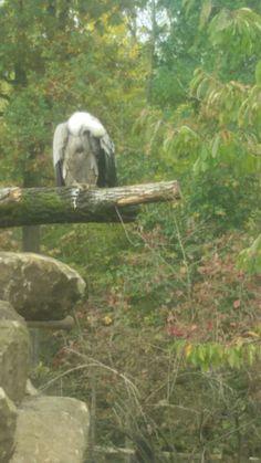Gaja zoo Kerkrade