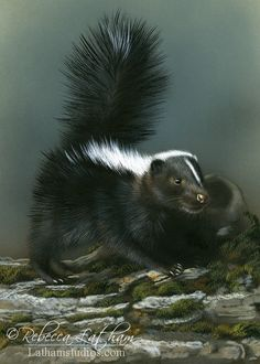 Skunk watercolor by Rebecca Latham.