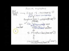Purine Synthesis Pathway (USMLE) - YouTube