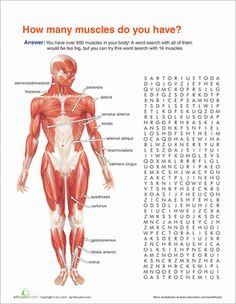Fifth Grade Life Science Worksheets: Muscle Anatomy