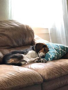 Snoozy Milo loves to snooze http://ift.tt/2q0zgnT