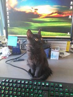 Charcoal Cat | Pawshake